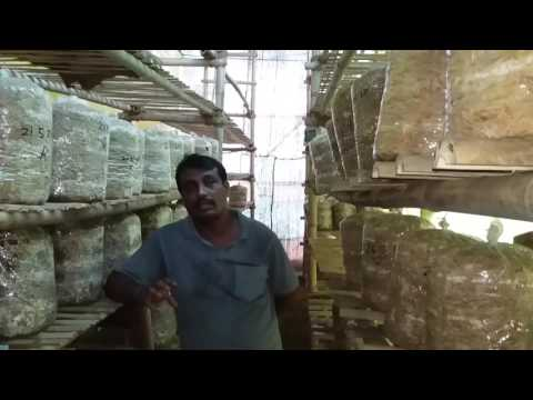 Successful Mushroom Growers by MAHAGRO INDIA