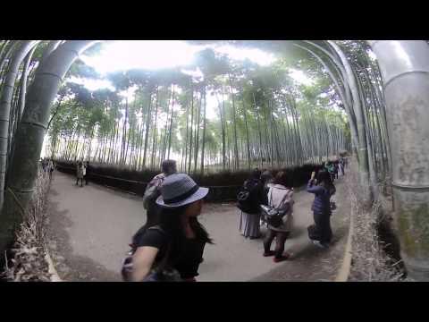 360 3D VR: Arashiyama Bamboo Grove (Kyoto) Watch in 4K!