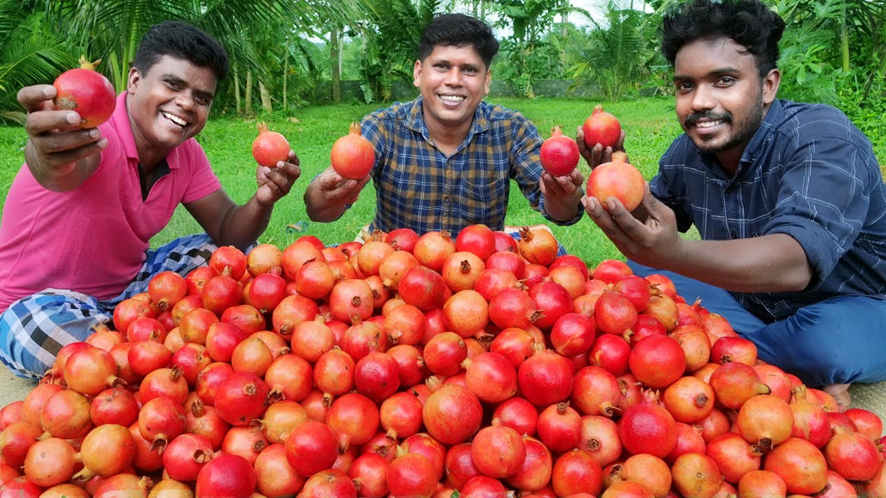 150 Kg POMEGRANATE | Pomegranate Fruit Cutting and Juice Making Skill | In Our Village