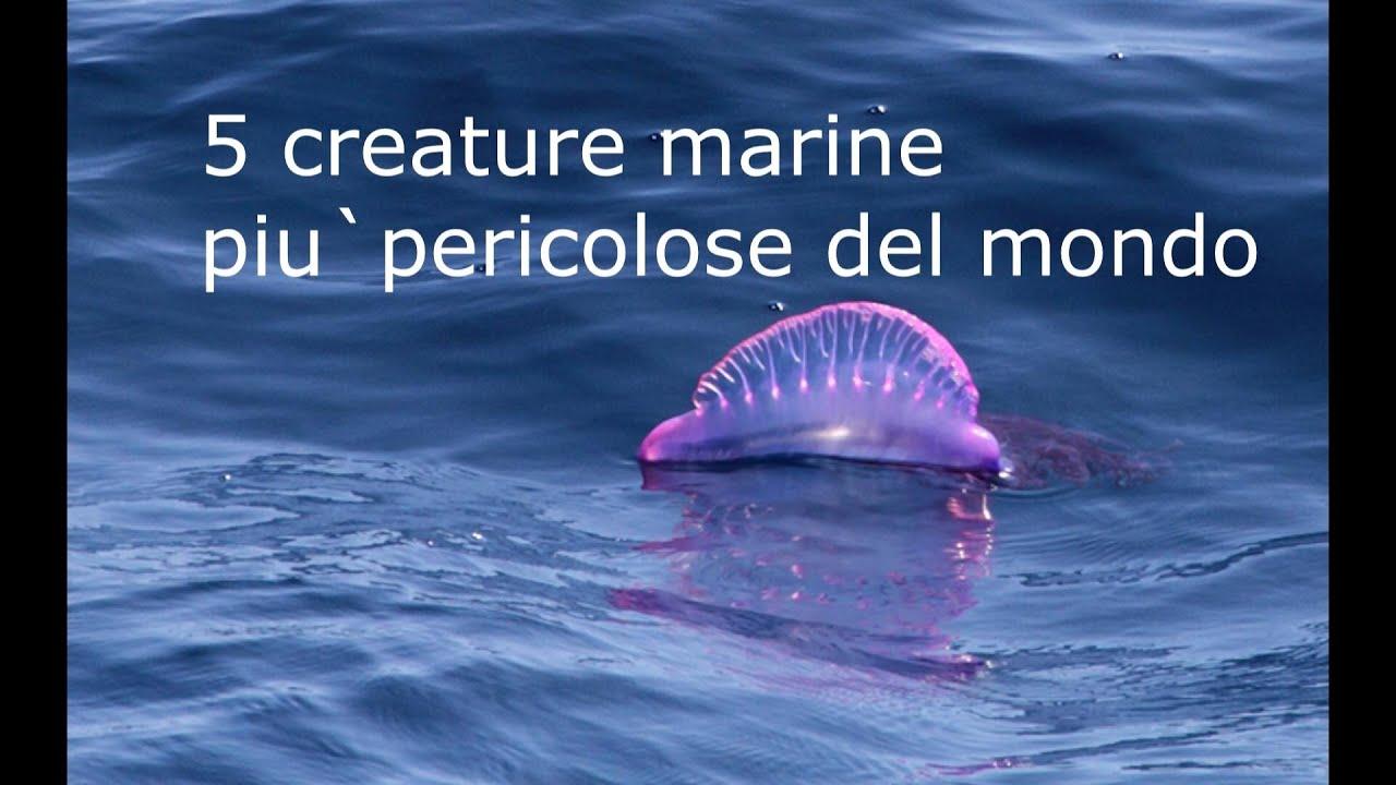 5 creature marine piu pericolose del mondo youtube for I piu fighi del mondo