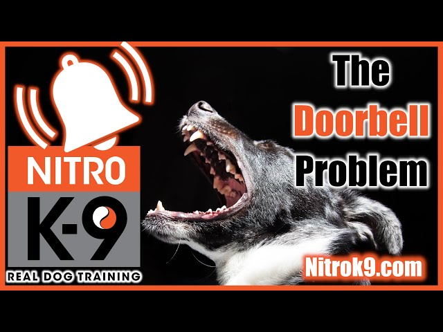 Stop Dog Barking at the Doorbell — Nitro Podcast Ep.1 (podcast)