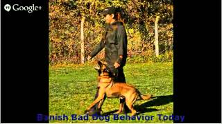 Tips On Dog Training - Erase All Bad Puppy Manners Tips On Dog Training