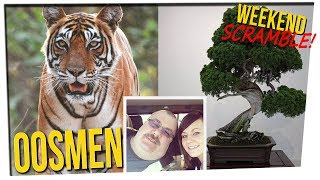 Weekend Scramble: Surprise Tiger || Funny Name || Bonsai Theft