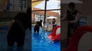 폭스테리어폴리 수영2_Swimming Poli2