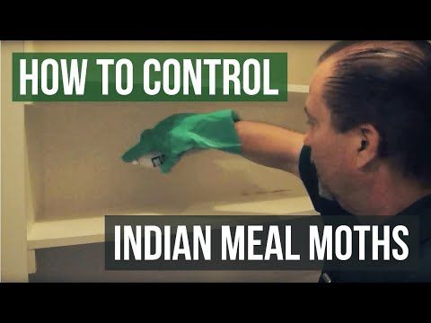 How to Get Rid of Indianmeal Moths and other Pantry Pests