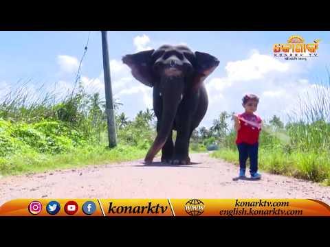 2-year-old Little Girl Bhama Friendship with Elephant Uma Devi in Kerala//