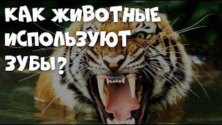 Как животные используют зубы? #detlektor