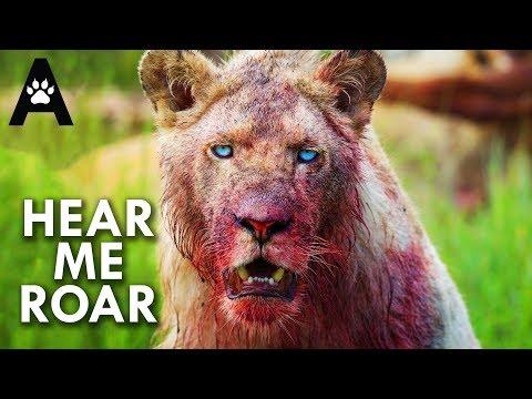 Lions: Pride Or Die