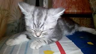 Самый милый котёнок на свете засыпает