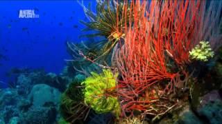 Чудеса голубой планеты - Австралия и Океания