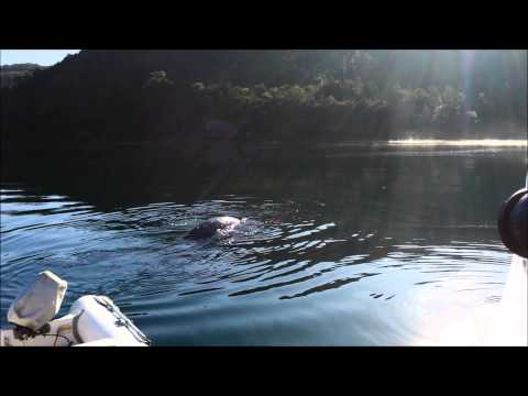Close Encounter with a Southern Right Whale