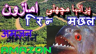 Pirana Fishing (Amazon Rainforest Documentary) - Part 3 (Urdu Hindi)