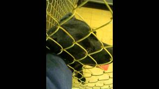 Fletcher At Mahoning County Dog Pound In Youngstown Ohio - January 23 2014