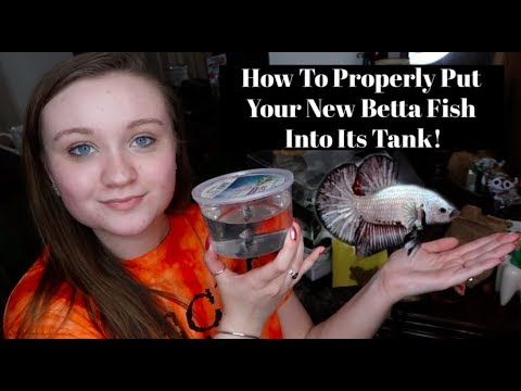 HOW TO PROPERLY PUT YOUR BETTA FISH INTO ITS NEW TANK/HOME!! | ItsAnnaLouise