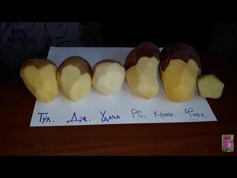 Вопрос: Что за сорт картофеля Башкирский shy Чем хорош?