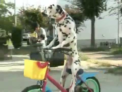 Just A Dog Riding A Bike To The Store For Treats Youtube