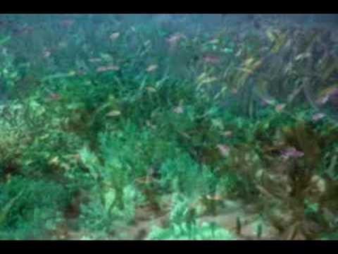 Marine Ecosystem Intro