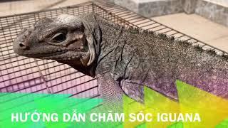 Iguana House . P1/5 Xây Chuồng iguana Siêu To Khỗng Lồ. ( Made A Giant Cage for Iguana ) P1
