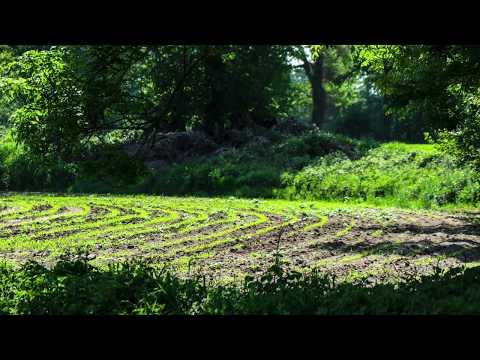 Voorspel en koraal 'Ik ben een engel van de Heer' (Liedboek 133) - Jan Post from YouTube · Duration:  2 minutes