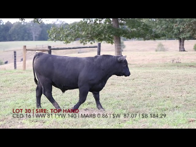 Edgewood Angus Lot 30