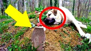 Hund besucht täglich das Grab seines Herrchens – Was er tut rührt mich zu Tränen...