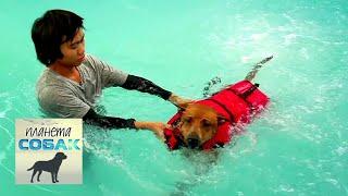Тайский риджбек. Планета собак 🌏 Моя Планета