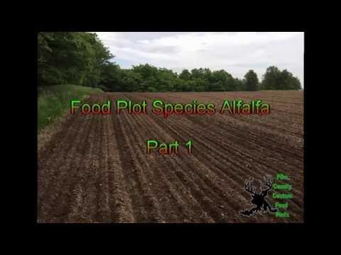 Alfalfa Profile Pt1