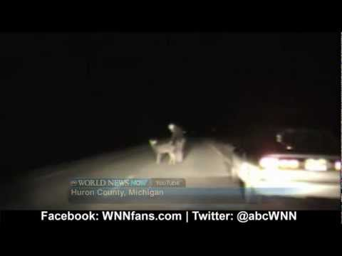 Deer Caught In the Headlights, Literally!