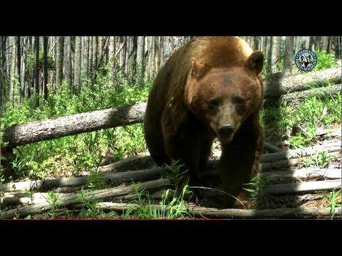 Colorado Big-Game Hunting Forecast