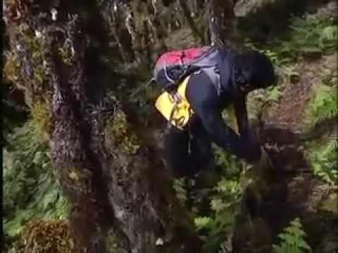 Jejak Petualang Survival - Pakis Binaiya VS Bambu Hutan