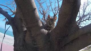 Cute cat playing in tree 🐱🌲
