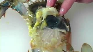 How to Clean Soft Shell-Crab.flv
