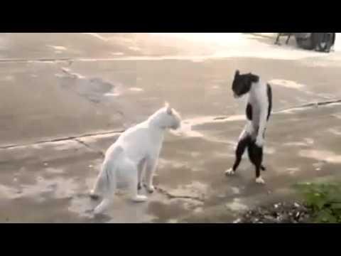 「猫 立って歩く」の画像検索結果