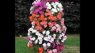 видео Вертикальное озеленение в квартире своими руками: стена из растений, как сделать цветочный забор