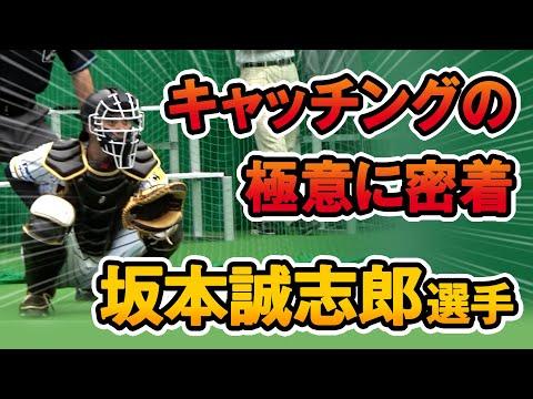 【坂本誠志郎選手】極上のキャッチング・フレーミングの秘訣とは?