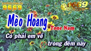 Karaoke Mèo Hoang | Tone Nam | Nhạc sống KLA | Karaoke 9669
