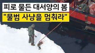 """피로 물든 대서양의 봄…""""물범 사냥을 멈춰라"""""""