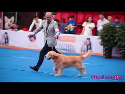 Vedios of NGKC Yingkou Champion Show美轮美奂dogshow之NGKC营口站精彩集锦