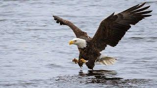 #3596. Птицы - хищники (В мире животных)
