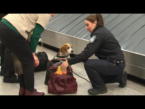 Canine customs agents