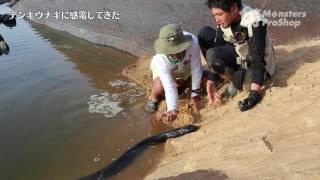 デンキウナギに感電してきた Experience the electric shock by an electric eel