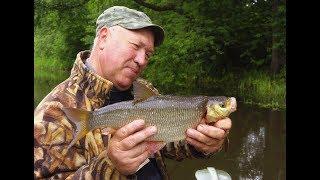 Рыбалка на малых реках черноземья. Спиннинг.