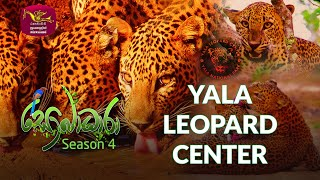 Sobadhara - Sri Lanka Wildlife Documentary | 2020-07-24 | Yala Leopard Center Thumbnail