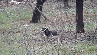 В городе Донецк Ростовской области администрация потравила Собак и Кошек