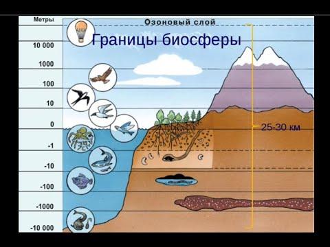 Вопрос: Что такое планктон, нектон, нейстон, какие живые организмы их образуют?