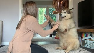 Teaching An Old Dog New Tricks. Phil V Niko (And Talking Milo!)