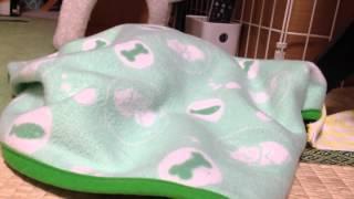 毛布にもぐってなんか動いてます。なかなか出てこないw 2012年10月14日...