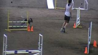 Cattle Dog Agility - Maizey's First Show (day 2)