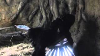 2016年2月20日(土) Feb. 20, 2016 上野動物園のこどもゴリラのコモモ...
