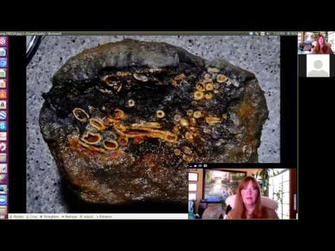 Roger Spurr: Mudfossils: A Mind-blowing View of Earth - April 25, 2017